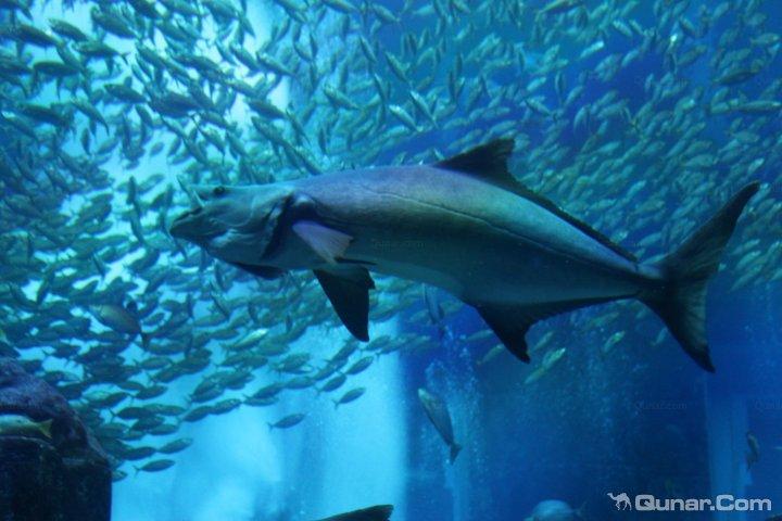 酒店坐落于迪拜市的棕榈岛上,坐落在其长800米的私人海滩区,并享有阿拉伯湾( Arabian Gulf)的壮丽景色。酒店拥有海底水族馆和广阔的水上乐园,亦为宾客提供了与海豚一起游泳的机会。所有客人居住的房间均拥有阿拉伯风格的装潢,并配备了大床、可观赏城市或阿拉伯湾全景的阳台以及一台平面卫星电视。酒店拥有供应地中海菜肴、意大利餐点和法国料理的多间美食餐厅。屡获殊荣的 Nobu餐厅还可提供当代特色的日本料理。酒店拥有一座水底迷宫以及中东地区最大的水上乐园,并且水上乐园内还配备几乎垂直的滑梯和数条激流水道。宽大
