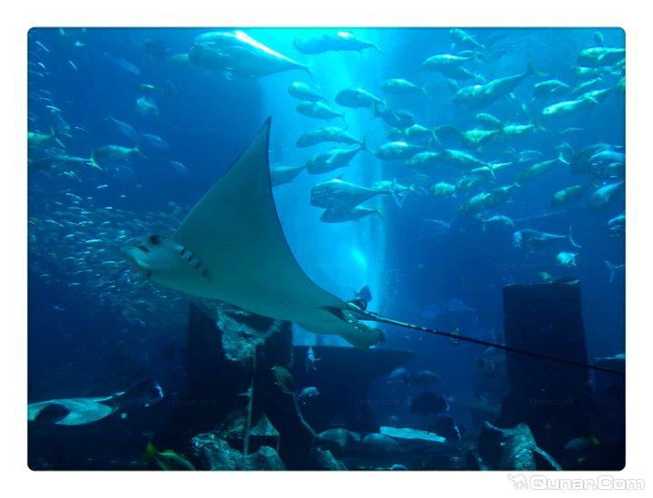 迪拜棕榈岛亚特兰蒂斯度假酒店